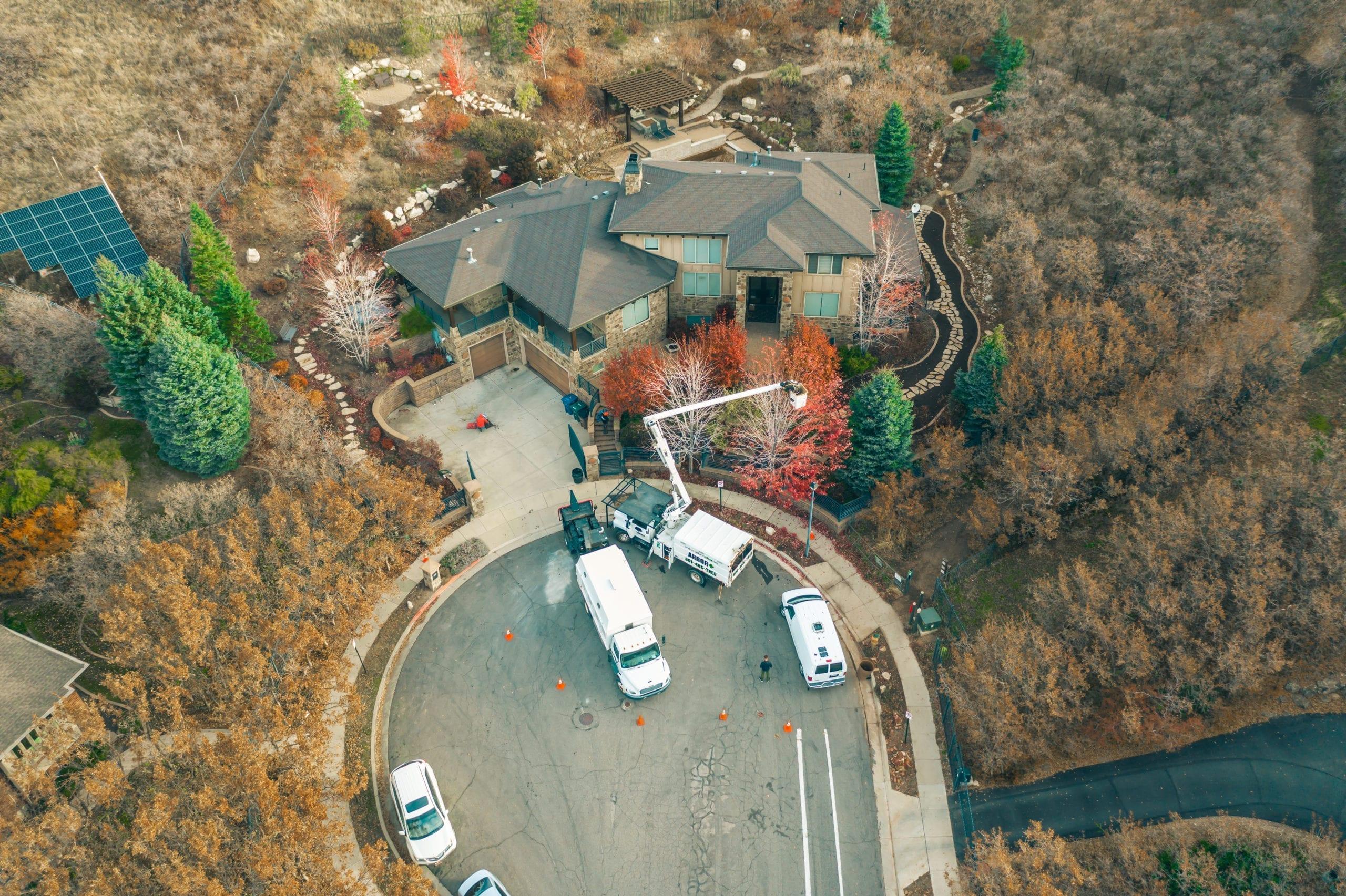 Certified Arborist Utah   Tree Service Pros