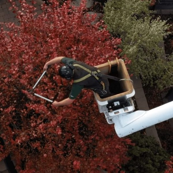 Pruning and Trimming Tree Care | Arbor Plus Utah