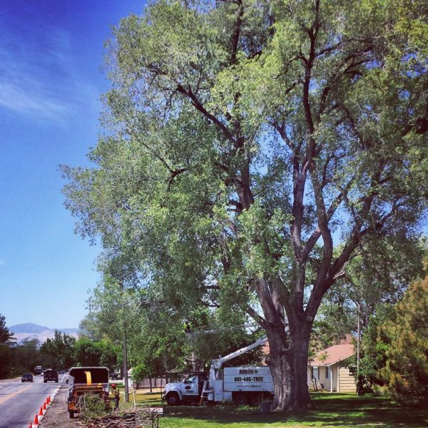 Arbor Plus Utah | Tree Trimming Service