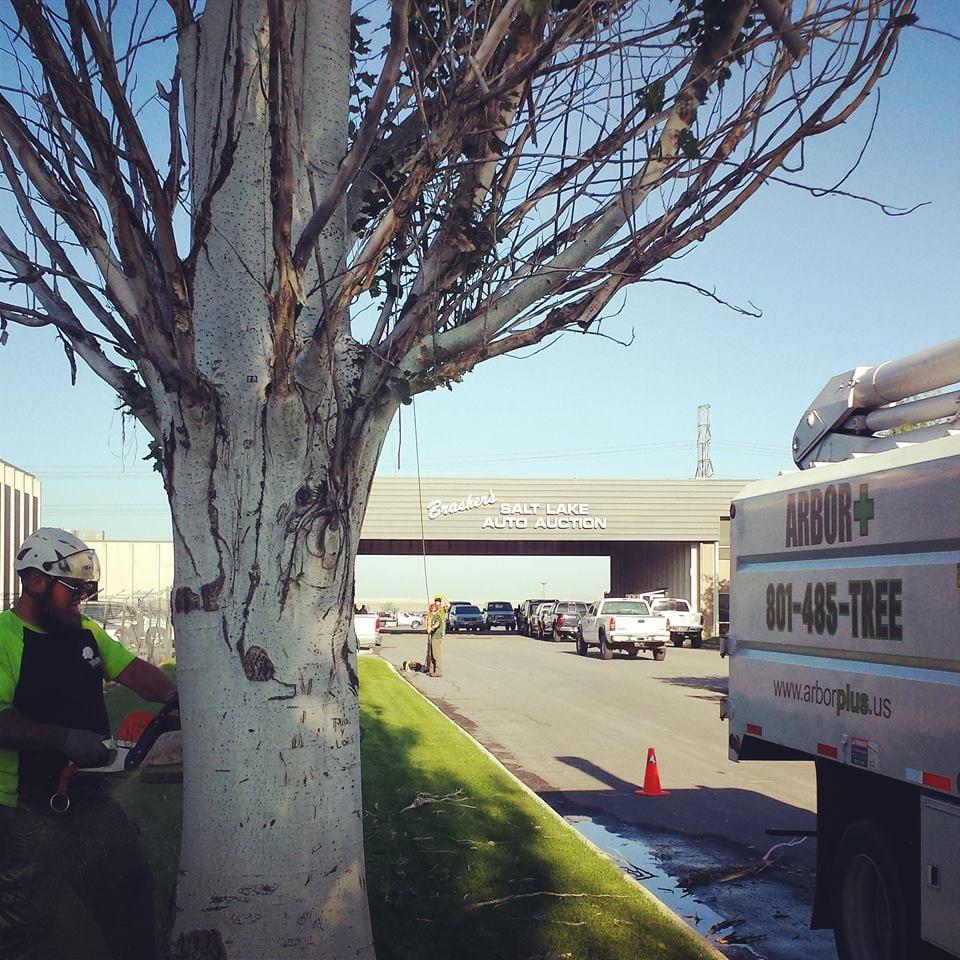 Utah Commercial Arborist | Arbor Plus
