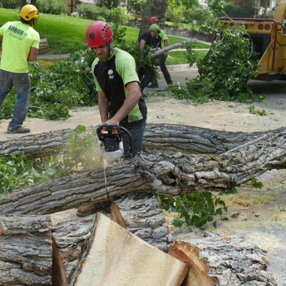 Utah Professional Arborist Services