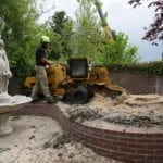 Professional Arborist Salt Lake County