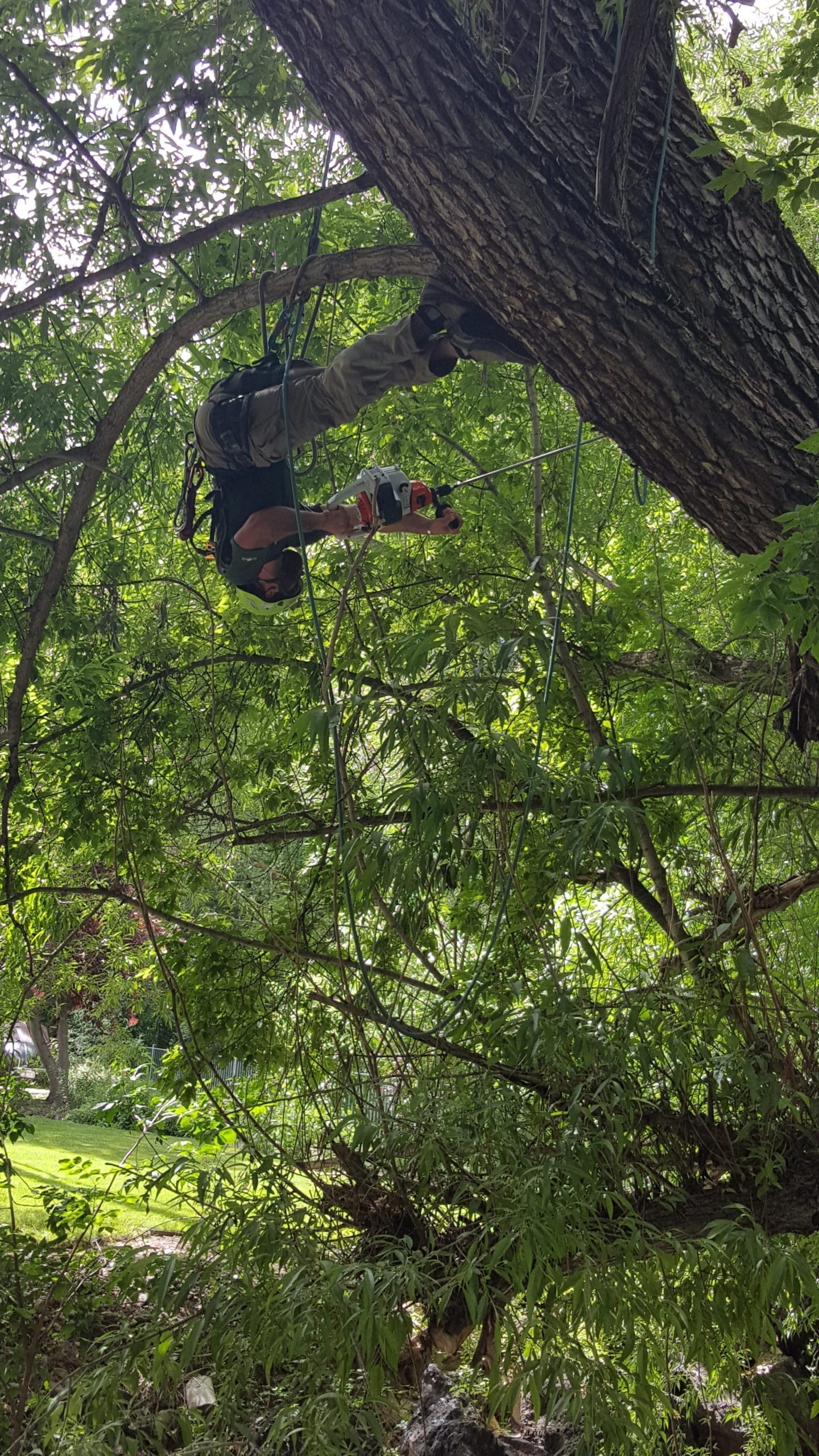 Quality Tree Service Professionals | Arbor Plus Utah