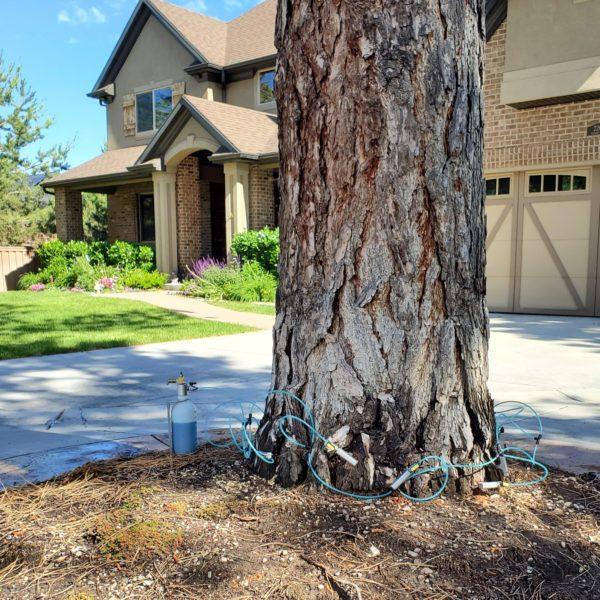 Tree Service Injections Arbor+ Utah
