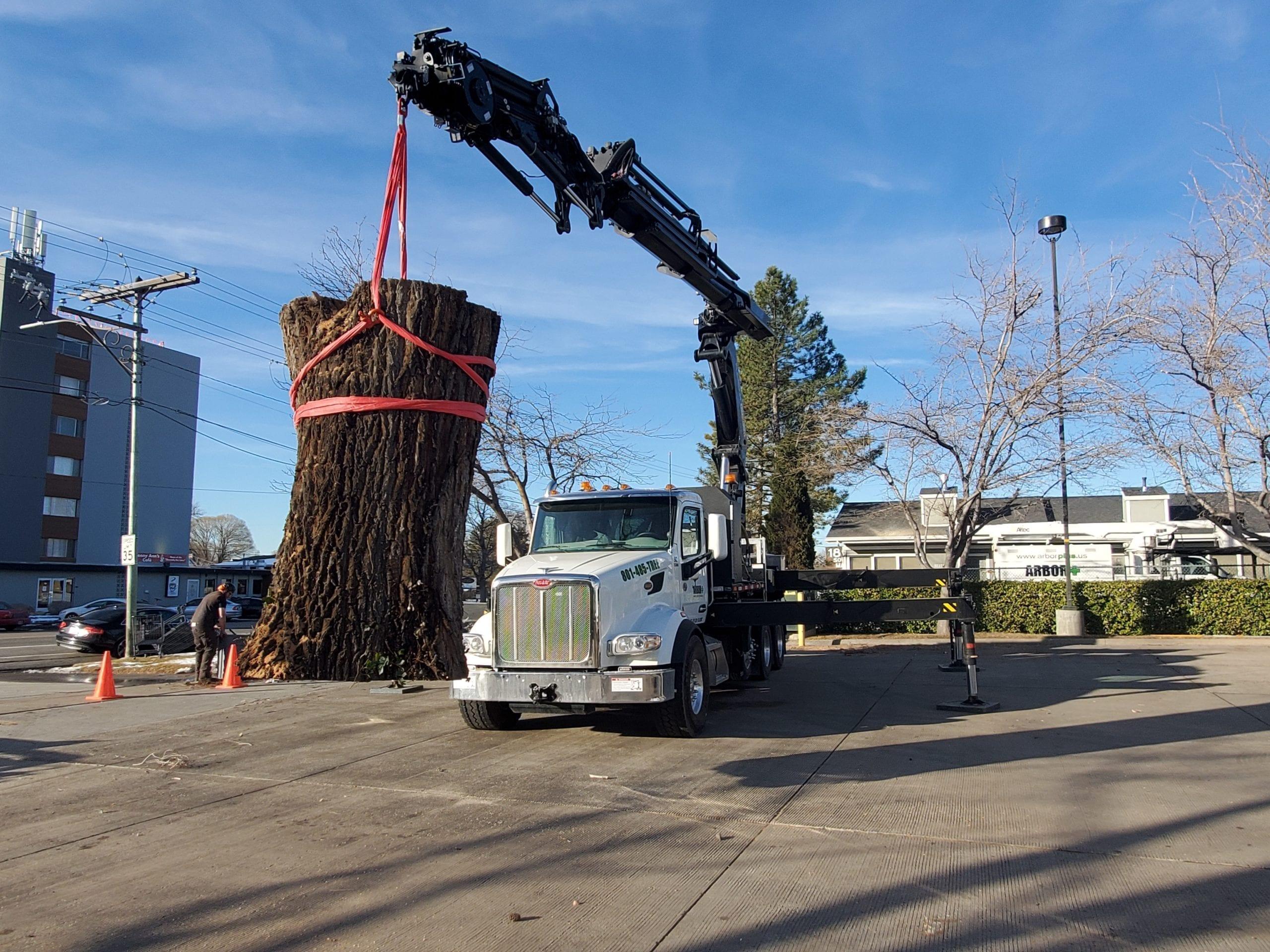 Commercial Tree Care Service | Arbor Plus Utah