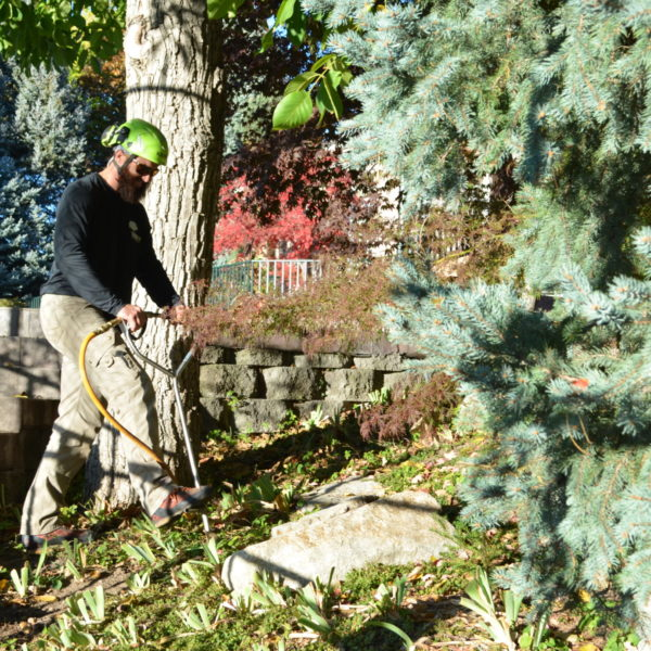 Tree Service Arbor+ Holladay Utah