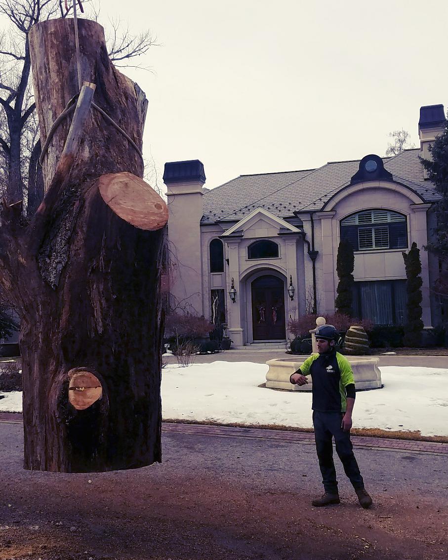 Emergency Tree Care Service | Arbor Plus Utah