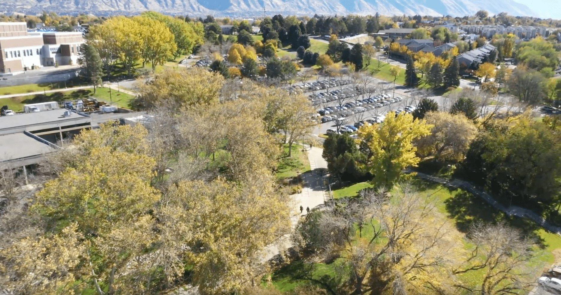 Commercial Tree Service Arbor+ Utah