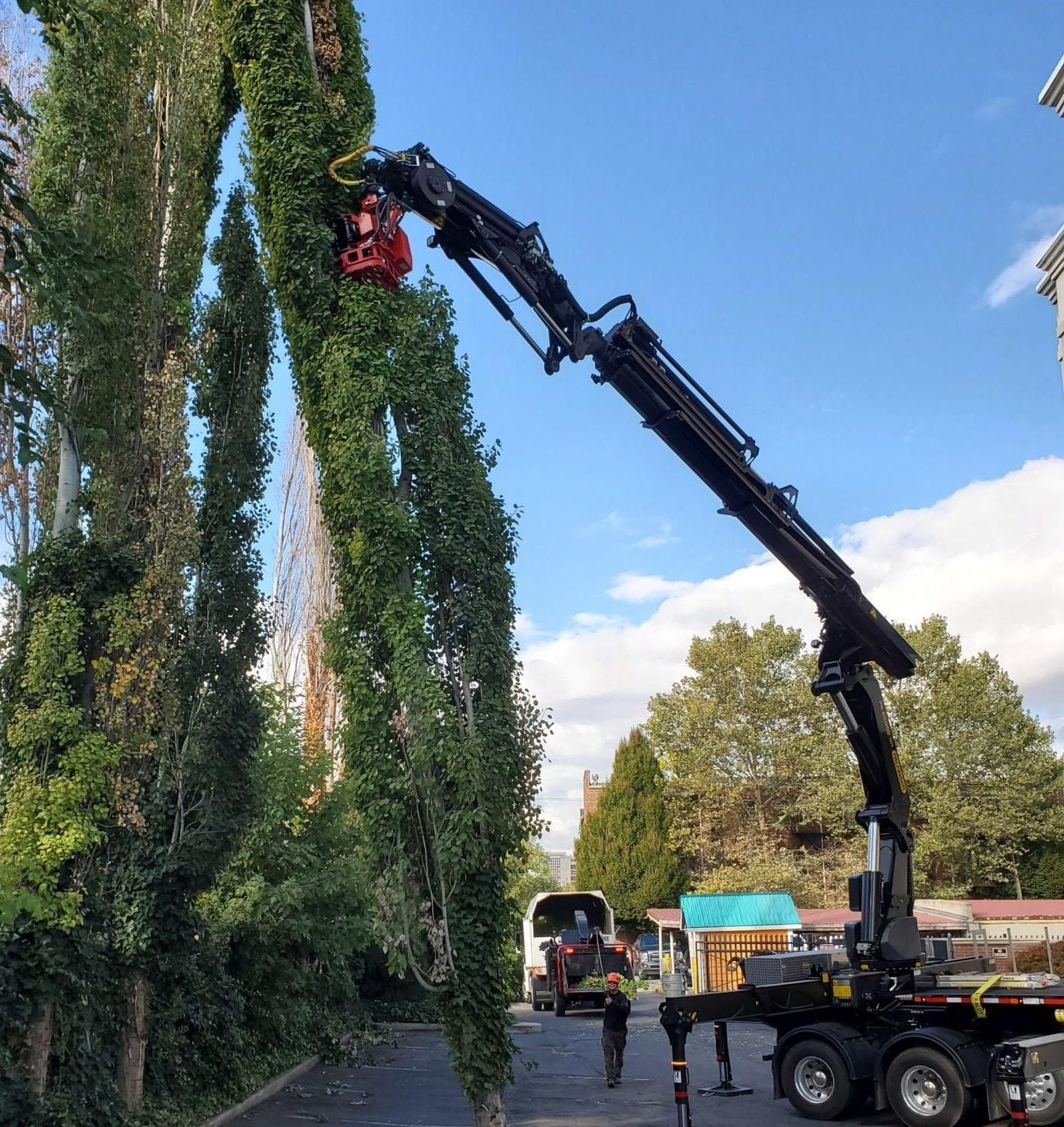 Salt Lake Commercial Tree Service | Arbor+ Utah