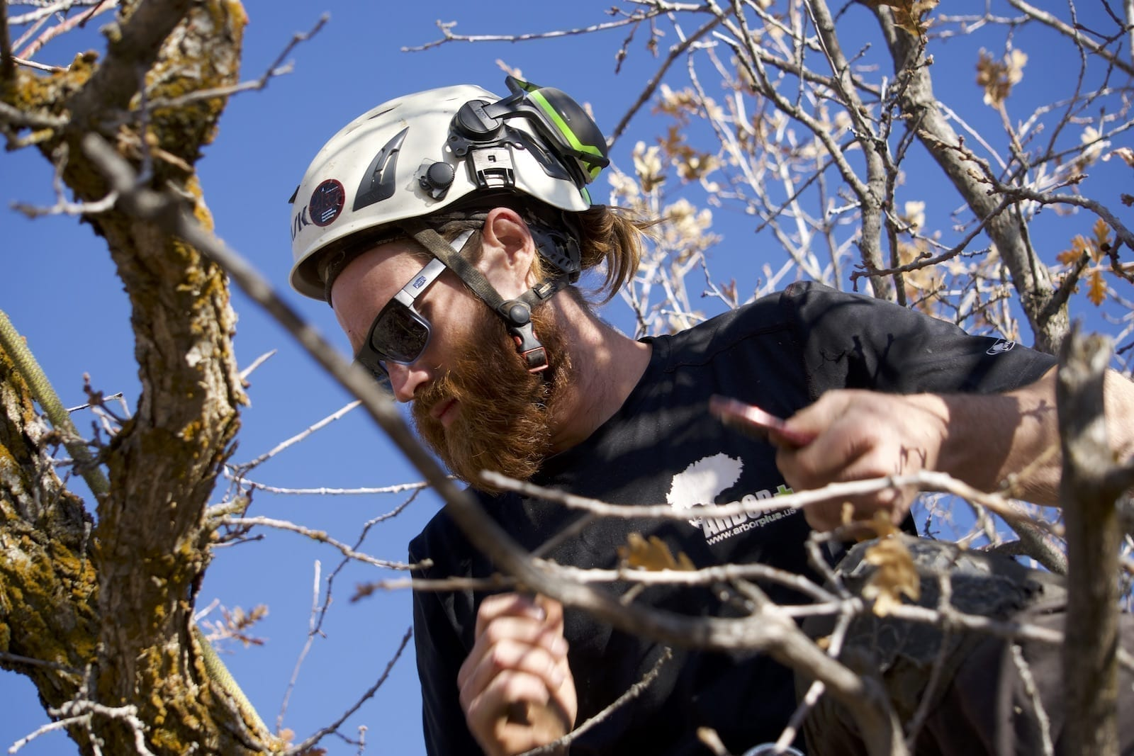 Salt Lake Commercial Tree Service | Arbor+ Utah