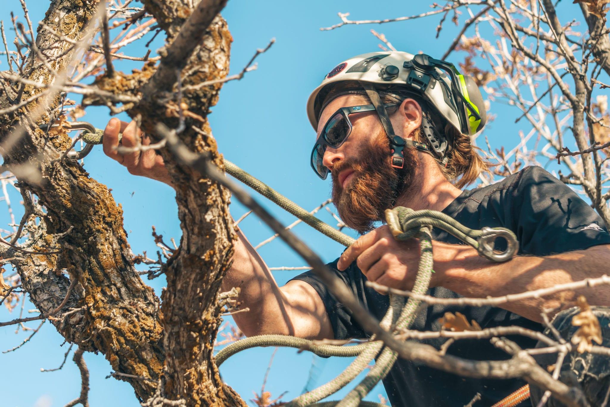 Tree Care Utah   Arbor+