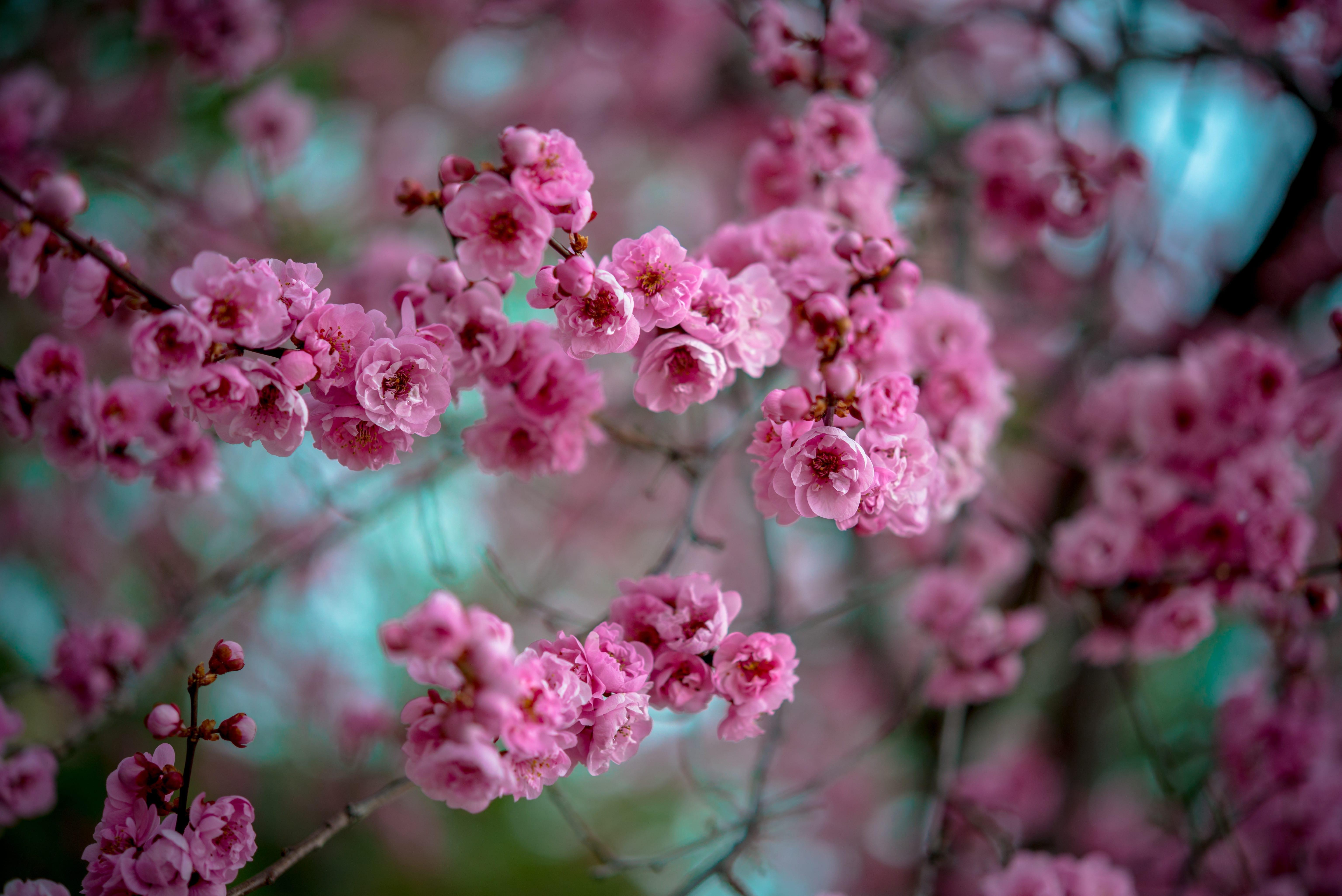 Flowering Tree Service Utah