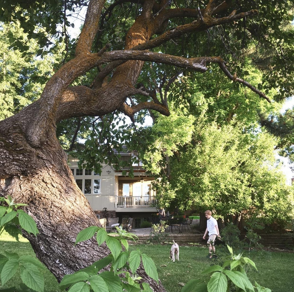 Salt Lake Backyard Tree Services | Arbor Plus Utah
