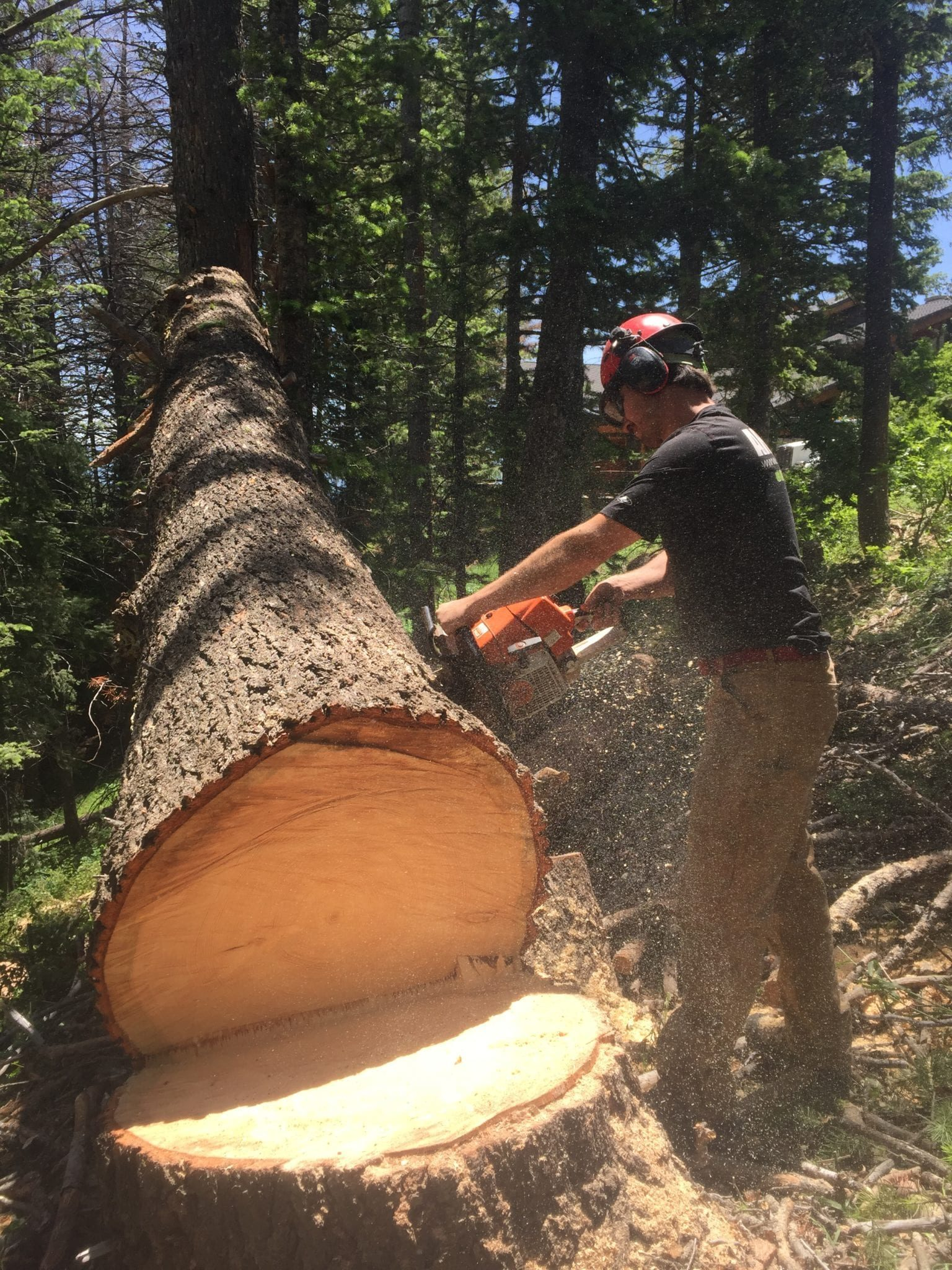Utah Tree Cutting Service by Arbor Plus