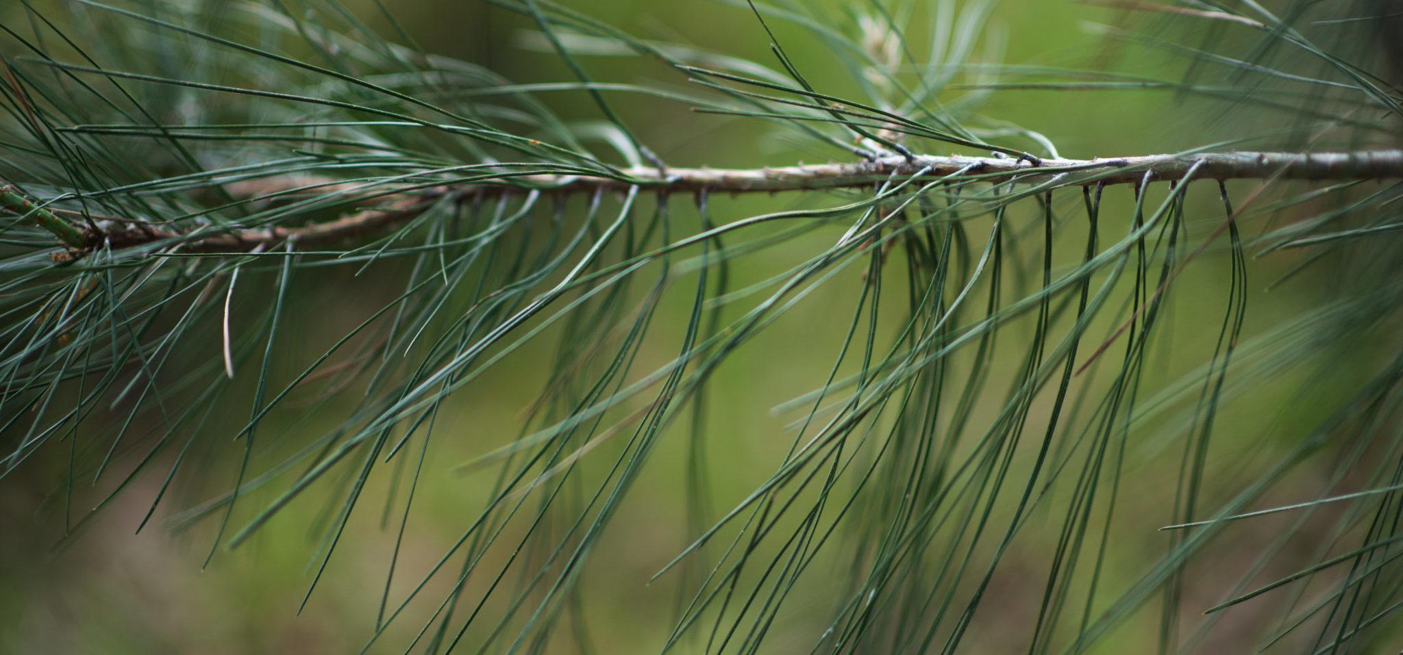 Tree Care Utah